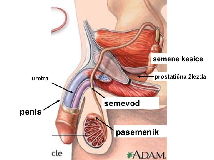 Ureoplazma és prosztatitis